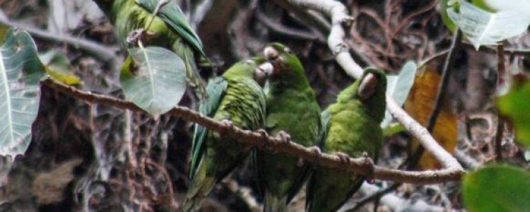 Chocoyero, un refugio de vida silvestre natural cerca de Managua